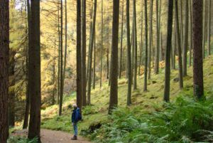 New Sustainable Timber Procurement Toolkit by Sustainable Scotland Network