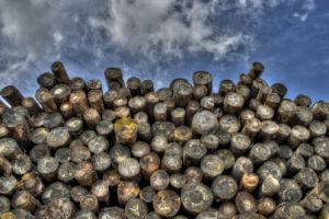 Study addresses illegality in Malaysian timber supply chains