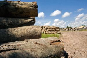 Majority of UK local authorities lack legal and sustainable timber procurement policy - WWF report
