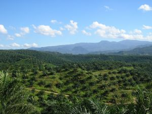 Palm oil and green public procurement