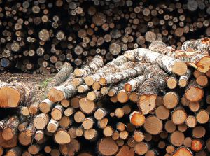 Public procurement can play major role in promoting sustainable forestry, states paper