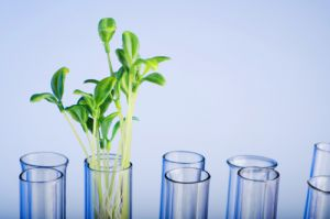 New factsheets provide clarity on bio-based products