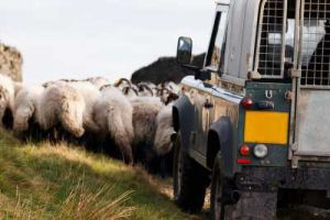 Report recommends integration of SPP in UK food production