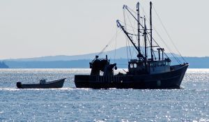 Common Fisheries Policy report says EU must overhaul fisheries eco-labelling