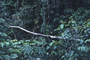 Norway supports Liberia to manage forests more sustainably with $37 million grant