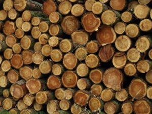 New legal timber regulations explained
