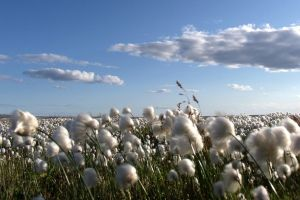 Fair trade cotton takes centre stage in pan-European awards ceremony