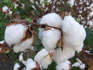 First Europe-wide award scheme recognising ethical cotton procurement established
