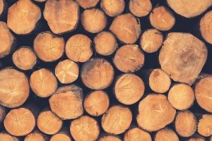 Procuring sustainable timber to combat deforestation